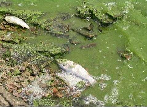 水廠控制專家簡述如何處置廢水水體中鹽離子濃度增高